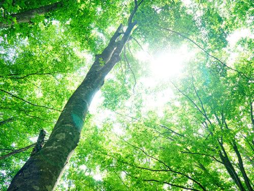 樹木の中の木漏れ日